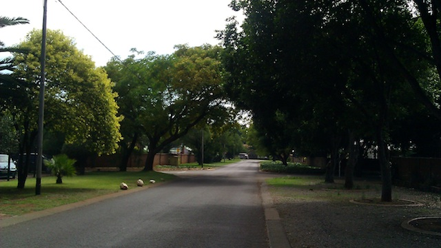 Spectacular trees in the neighborhood
